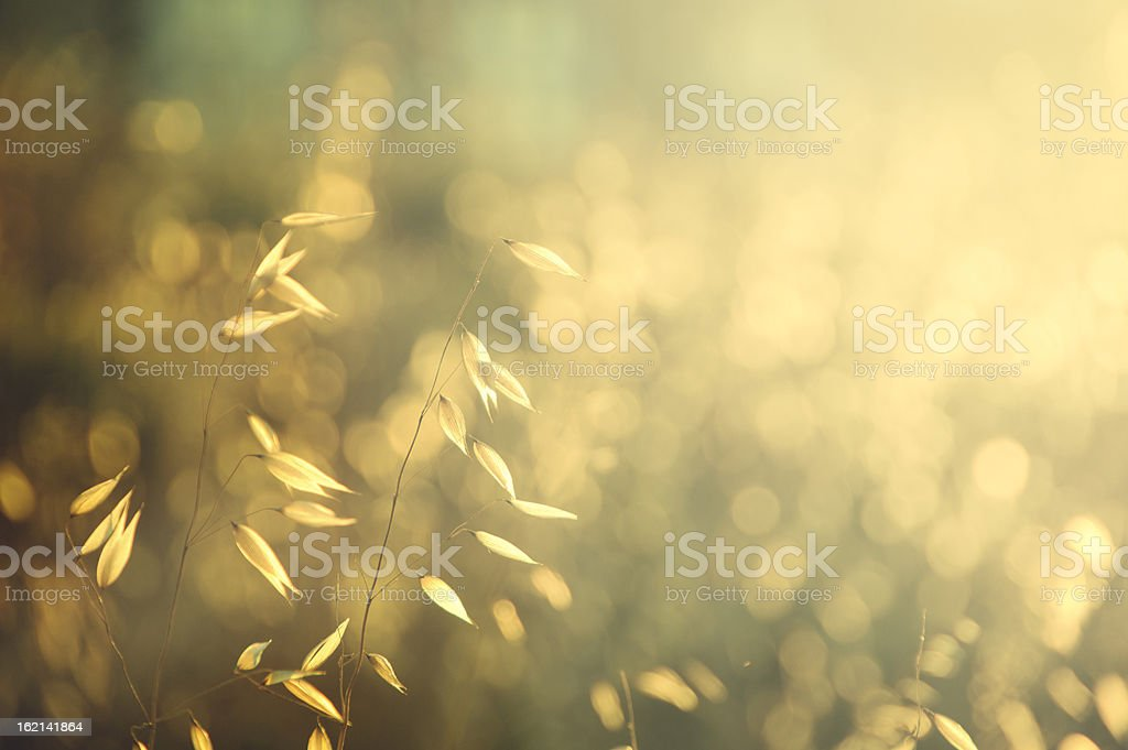 Small dry leaves illuminated by sunlight at sunset royalty-free stock photo
