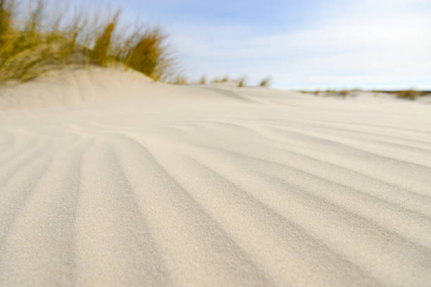 Small dunes at the beach during a beautiful spring day - foto stock