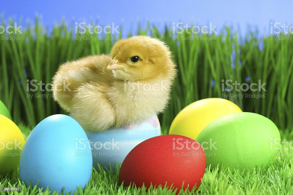 Small easter chick royalty-free stock photo
