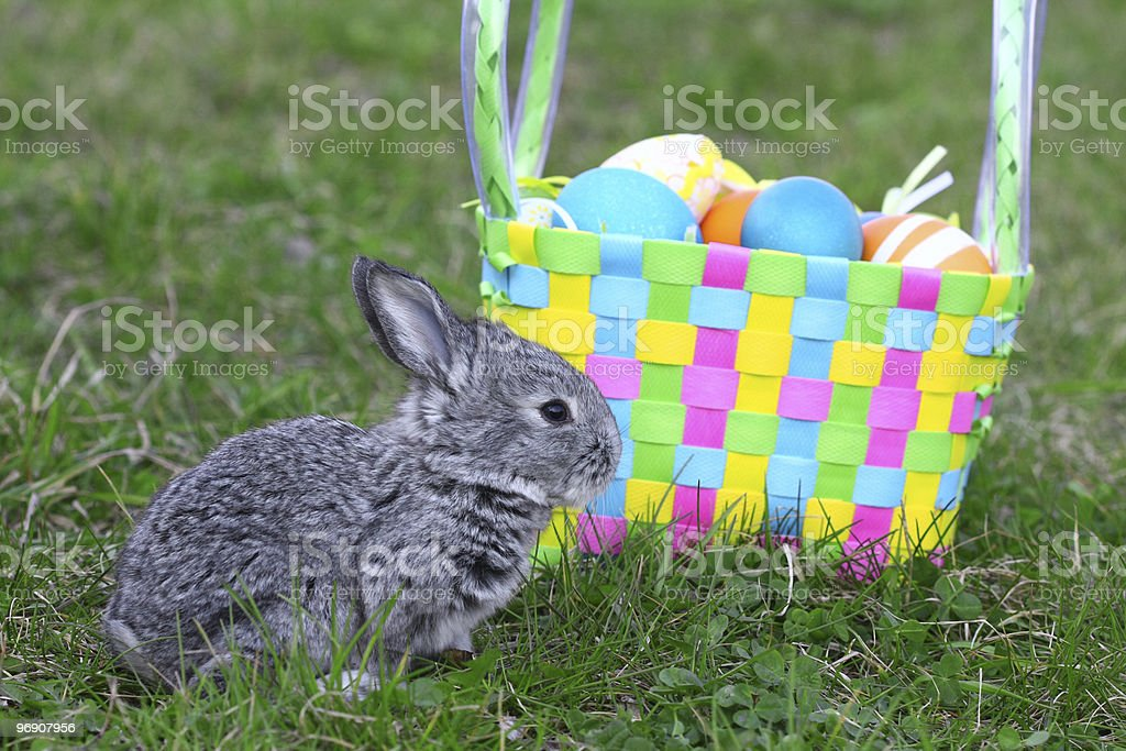 Small easter rabbit royalty-free stock photo