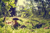istock Small edible mushroom in the woods alone 186821030