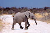 The Etosha National Park is a big animal reserve in the northern part of Namibia.