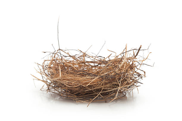 "Small Empty Bird Nest Isolated on White ""Small nest about 3 inches in diameter, side view. Nest is made of grasses, twigs, and rootlets."" terryfic3d stock pictures, royalty-free photos & images"