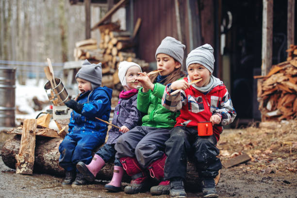 Small family business of a Maple syrup industry stock photo