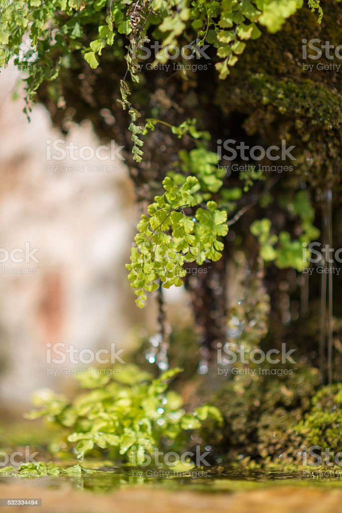small fern leaf at small waterfall stock photo