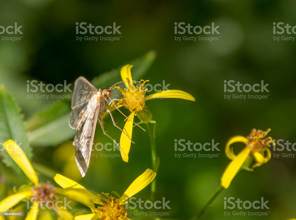 small filigree butterfly stock photo