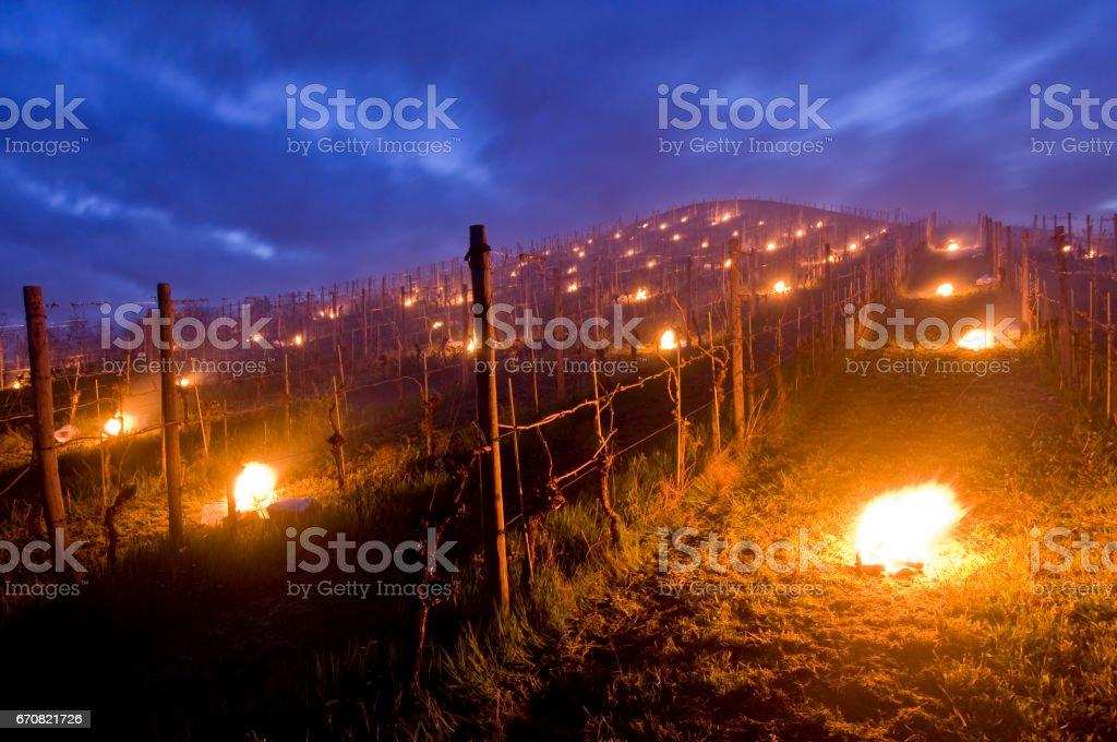 Kleine Brände auf dem Weinberg - Frostschutz im Frühjahr – Foto