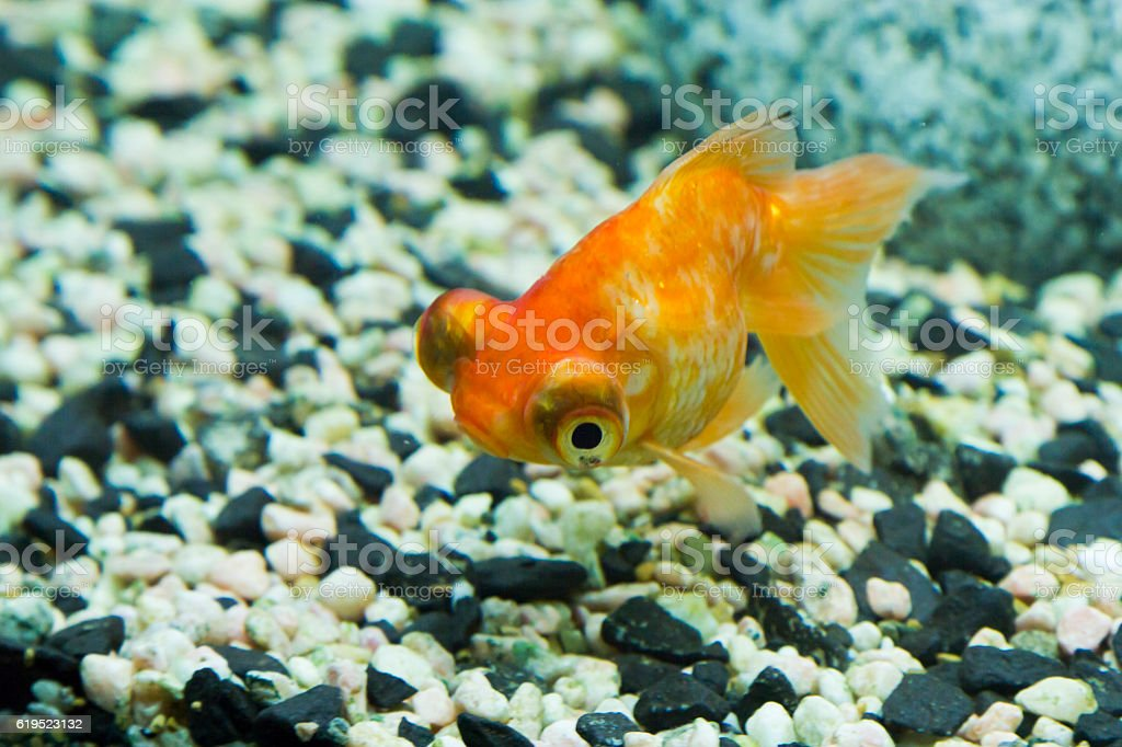 Fotograf a de peces peque os en un acuario y m s banco de for Peces para acuarios pequenos
