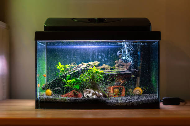 Small fish tank aquarium with colourful snails and fish at home on wooden table. Fishbowl with freshwater animals in the room Small fish tank aquarium with colourful snails and fish at home on wooden table. Fishbowl with freshwater animals in the room animal captivity building stock pictures, royalty-free photos & images