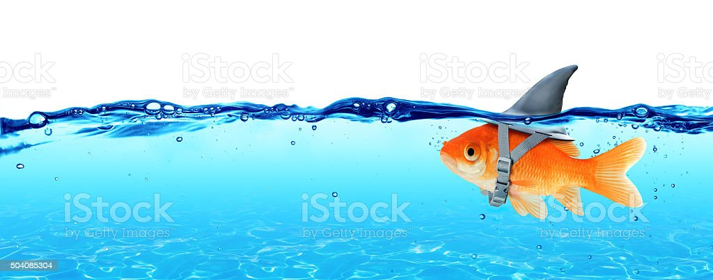 Goldfish wearing fin shark underwater - Business Concept