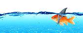 Goldfish wearing fin shark underwater  - Business Concept