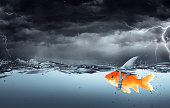 Goldfish Wearing Fin Shark Swimming In Tempest - Business Concept