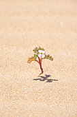 Small flower blooming in a desert.