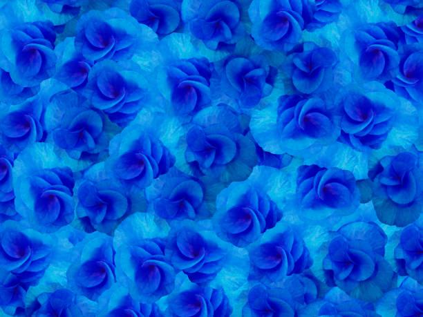 """kleine blumen geranie leuchtend blau. hintergrund der blumen. für das design. """"n""""n - blumendrucktapete stock-fotos und bilder"""
