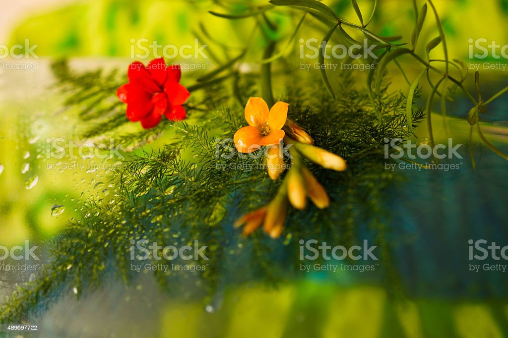 Small flowers on ferns stock photo