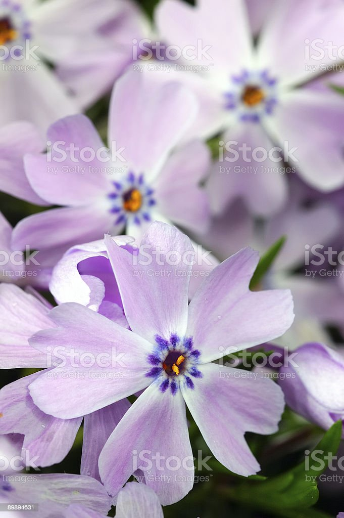 small flowers royalty-free stock photo