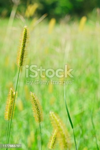 istock Small  flowers with field 1177683751