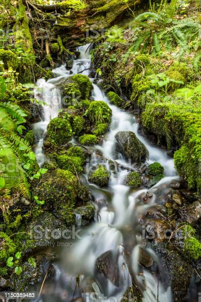 Photo of Small flowing stream in the Washington wilderness on the north side of the Columbia River