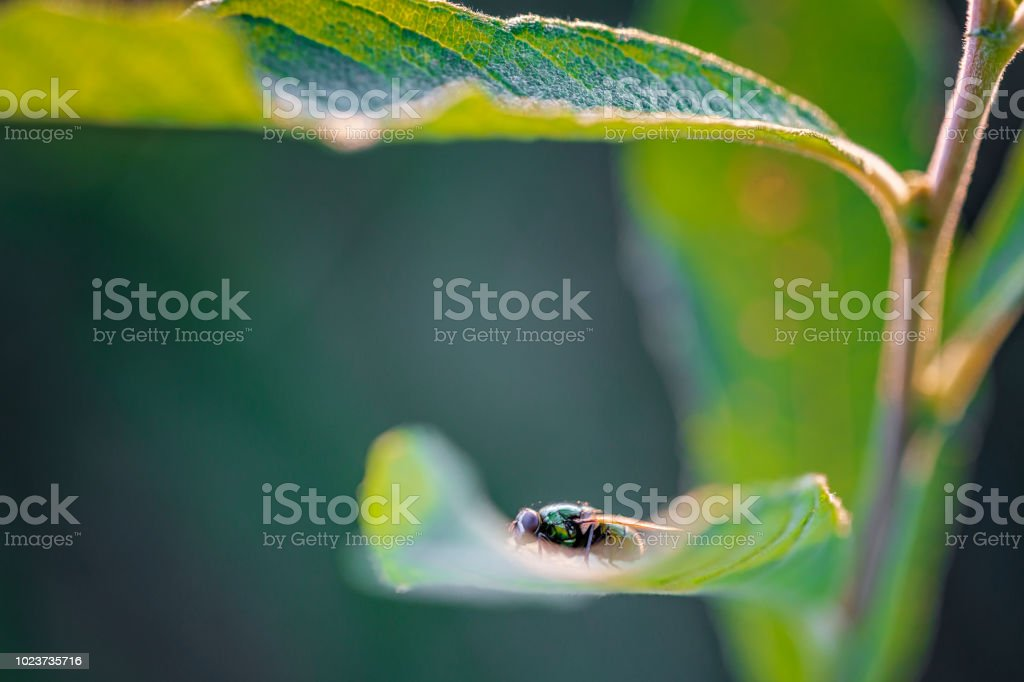 Small fly on a leaf stock photo