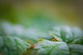 Small fly on a leaf in a waste enviroment, little life in a big universe