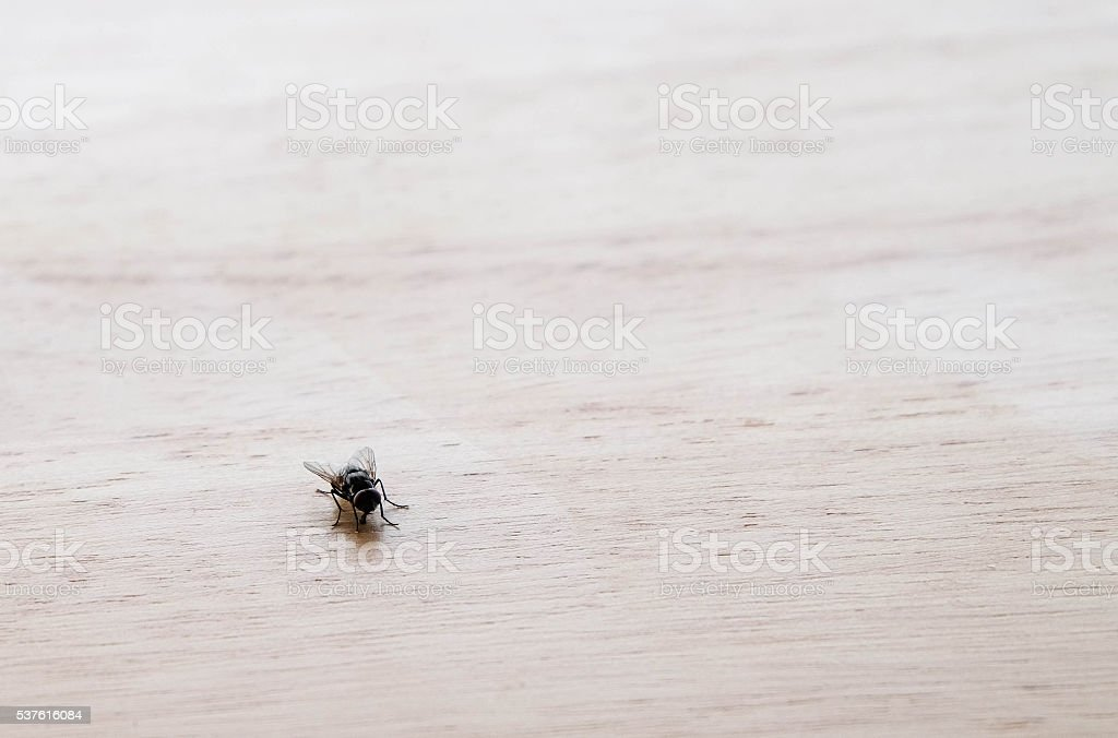 Small fly on wooden table at left down corner background stock photo