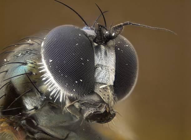 Small fly - poss. Dolichopodidae stock photo