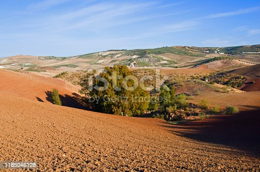 1155573645istockphoto Small forest in the center of the fields, brown valleys. Autumn, Spain 1185046128