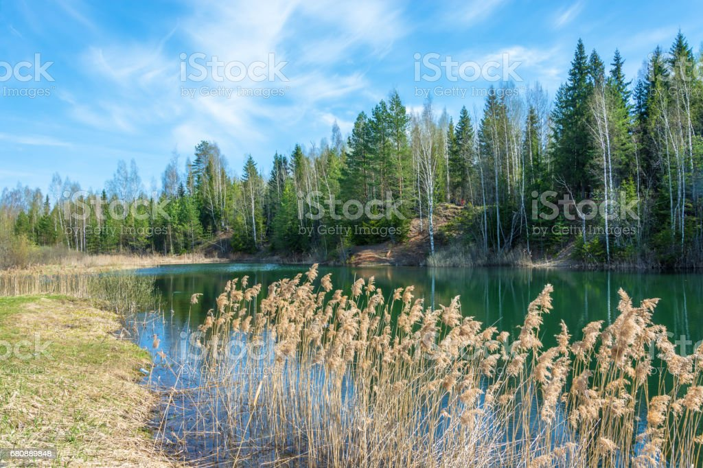 Small forest lake in Sunny day. royalty-free stock photo