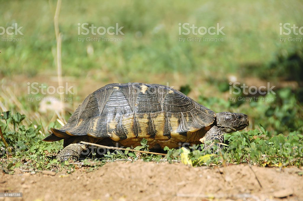 small forest turtle royalty-free stock photo