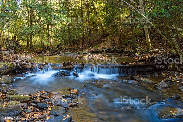 Photo of Small Forested Creek