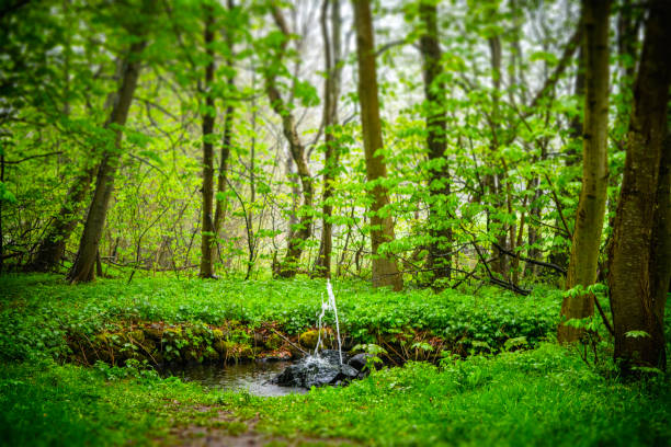 Small fountain in a green forest in the spring stock photo