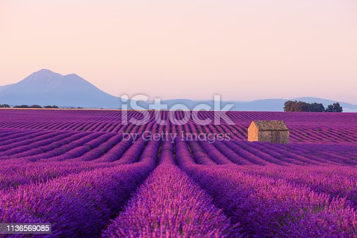 istock Small French rural house in blooming lavender fields 1136569085