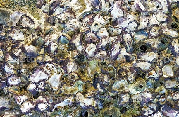Photo of small fresh oyster stay together on the ocean coast rock