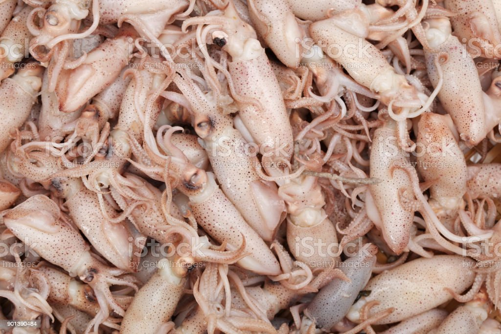 Small Freshly Steamed Squids isolated on white background stock photo
