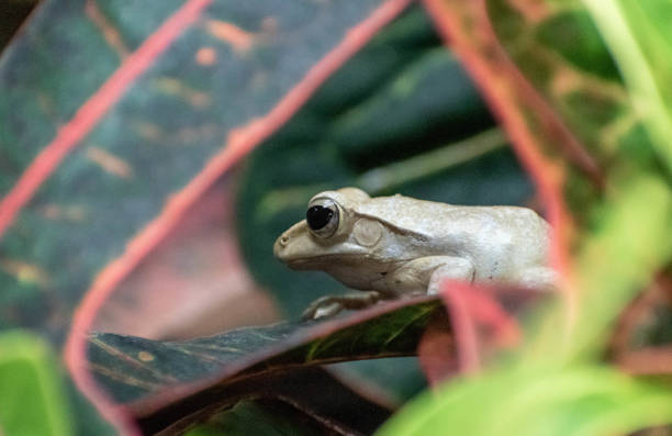 Small frog on a leaf stock photo