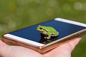 Small Frog on smart phone - funny photography, small European tree frog, blur background, Green Tree Frog Isola della Cona, Monfalcone, Italy, amphibian, frog, full frame, copy space
