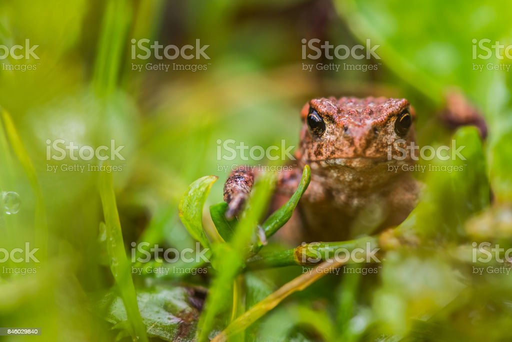 Small frog stock photo