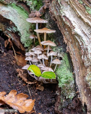 Small Fungus Growing Inside an Old Dead Tree