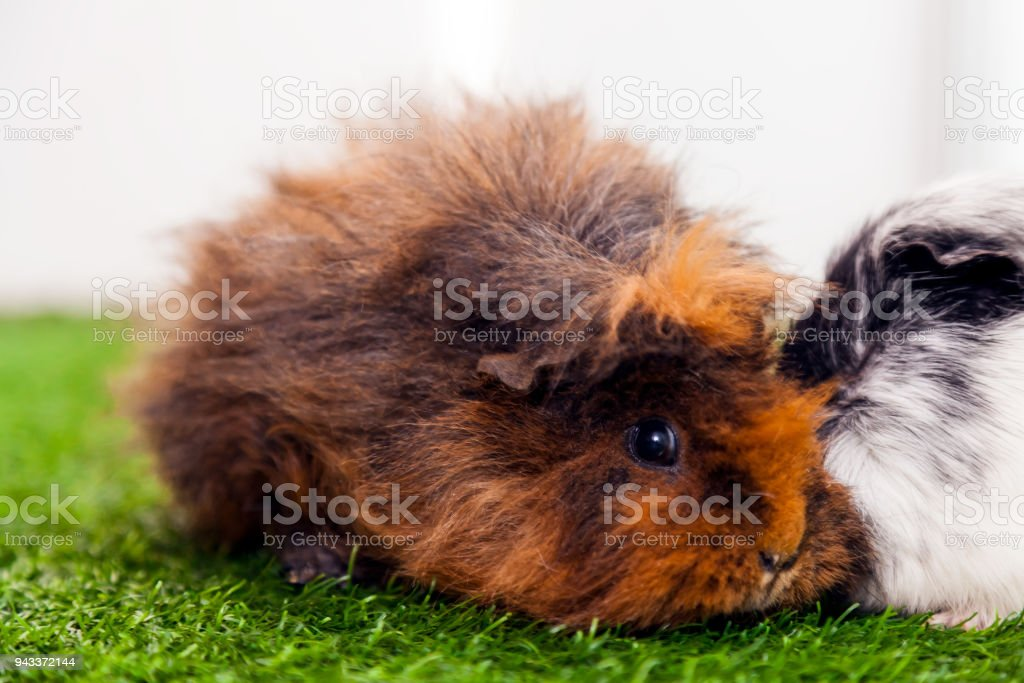 small funny  brown rabbit stock photo