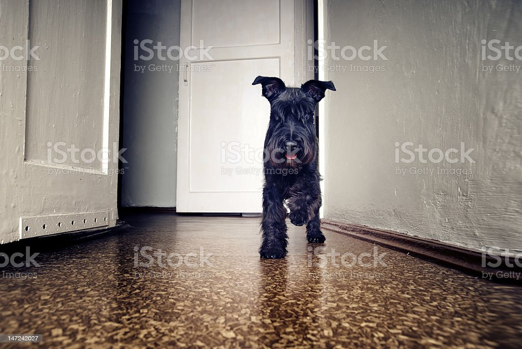 Small funny dog royalty-free stock photo