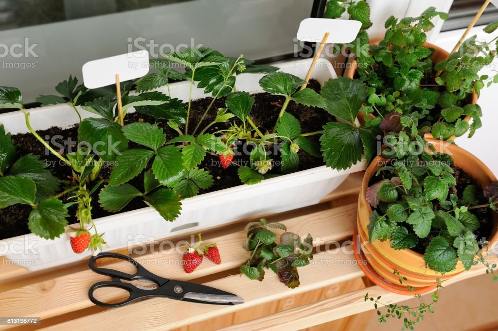 Small garden built on the balcony in the apartment stock photo