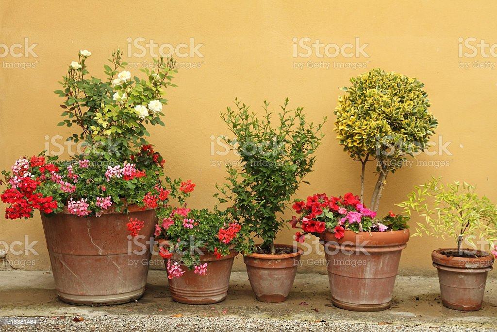 Kleiner Garten Töpfe – Foto