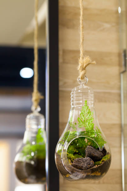 Small garden of terrarium bottle in glass hanging. stock photo