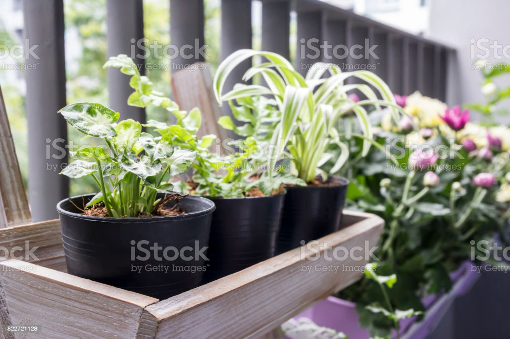 Small garden on the balcony stock photo