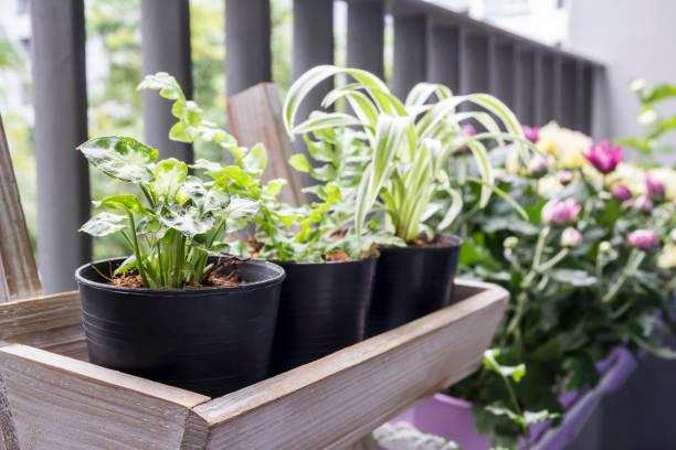 Small garden on the balcony stock photo