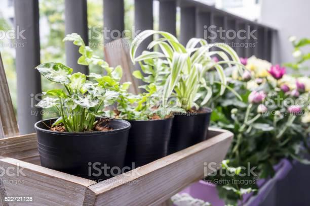 Photo of Small garden on the balcony