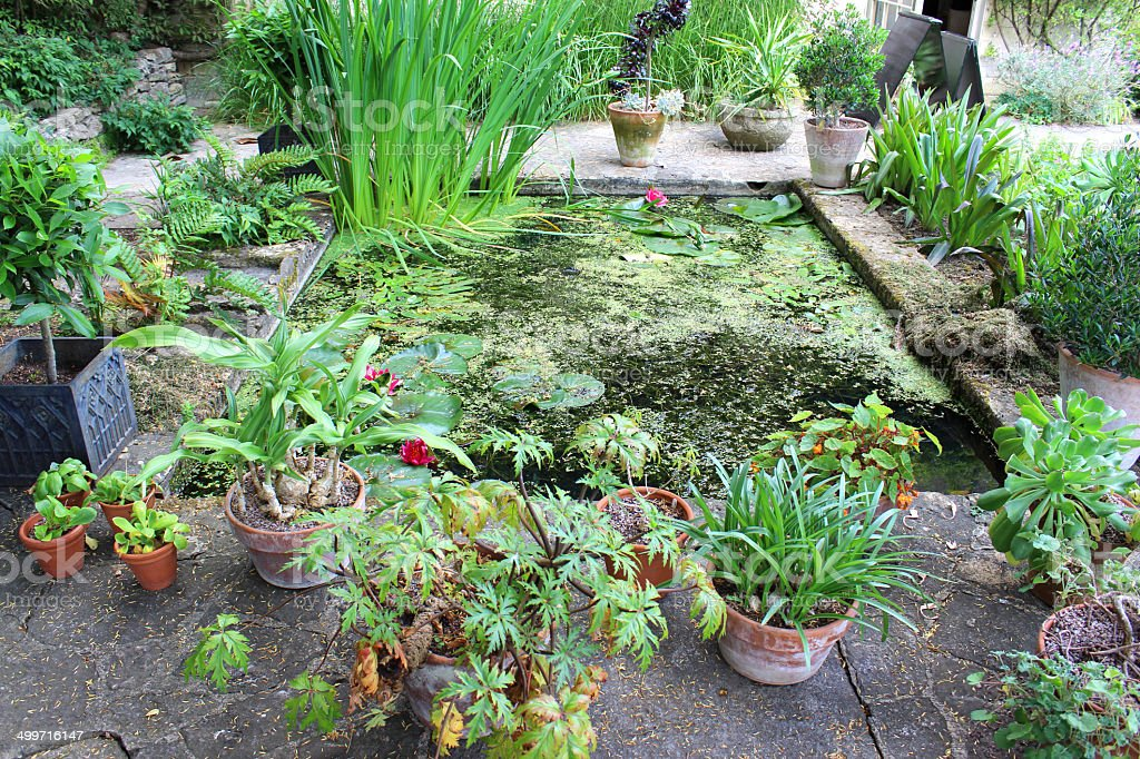 Small Garden Pond Water Lilies Bog Plants Flower Plant Pots Stock