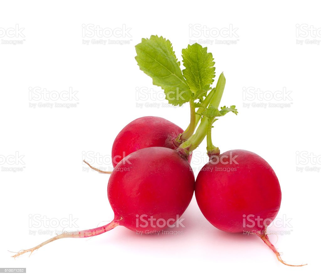 Small garden radish stock photo