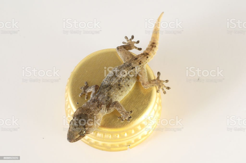 Small Gecko Lizard and Bottle Cap stock photo