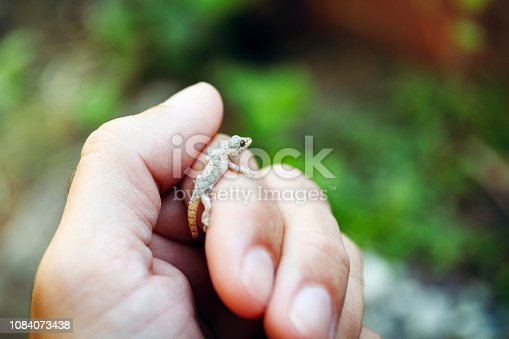 Gecko is resting on the finger of a hand. Extreme closeup.